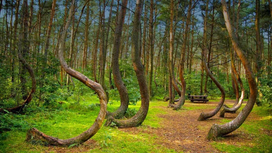 hoia-forest-the-5-freakiest-places-on-earth.jpeg
